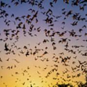 Bats At Bracken Cave Poster