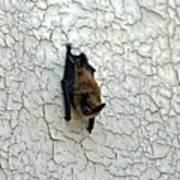 Batty Grin Poster