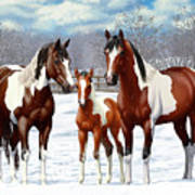 Bay Paint Horses In Winter Poster