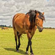 Bay Pony Poster