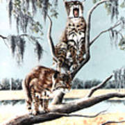 Bayou Bobcats Poster by DiDi Higginbotham