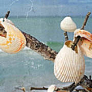 Beach Art - Seashell Shrine - Sharon Cummings Poster