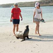 Beach  At Santa Fe Island In Galapagos Poster