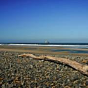 Beach Driftwood Poster