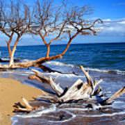 Beach Driftwood Fine Art Photography Poster