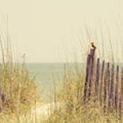 Beach Fence In Grassy Dune South Carolina Poster