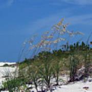 Beach Grass 3 Poster