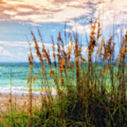 Beach Grass II Poster