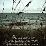 Beach Grass Oats Isaiah 11 Poster