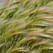 Beach Grasses Poster