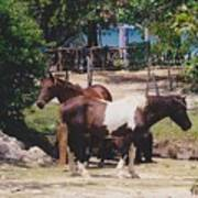 Beach Horses Poster