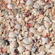 Beach Seashells Poster