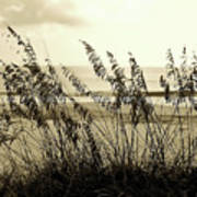 Beach - Sepia Poster