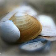 Beach Shells Poster