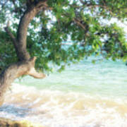 Beachscape Tree Poster