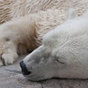 Bear Nap Poster