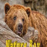 Bear Nature Boy Poster