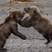 Bear Play Poster