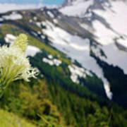 Beargrass Flower On The Slopes Of Mt. Hood Poster