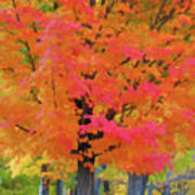 Beautiful Autumn Day Poster