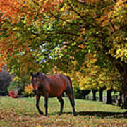 Beautiful Bay Horse In Fall Poster