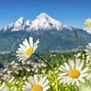 Beautiful Blooming Flower Panorama Poster