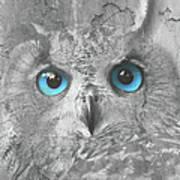 Beautiful Blue-eyed Owl Poster