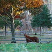 Beautiful Brown Horse Poster