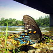 Beautiful Butterfly At The River II Poster
