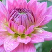 Beautiful Flower In Daybreak Poster