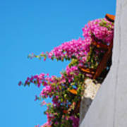 Beautiful Flowering Vine On Patmos Island Greece Poster