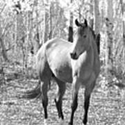 Beautiful Horse In Black And White Poster
