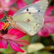 Beautiful Moth Poster