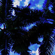 Beautiful Palm In Blue Sky Poster