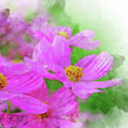 Beautiful Pink Flower Blooming For Background. Poster