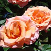 Beautiful Pink Orange Rose Flowers Garden Baslee Troutman  Poster