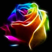 Beautiful Rose Of Colors No2 Poster by Pamela Johnson