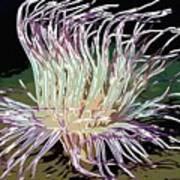 Beautiful Sea Anemone 1 Poster