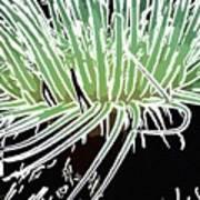 Beautiful Sea Anemone 3 Poster