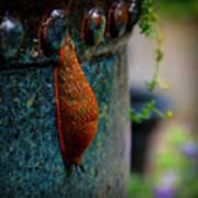 Beautiful Slug Poster