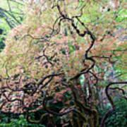 Beautiful Japanese Garden,butchart Gardens,victoria,canada 3. Poster