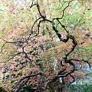 Beautiful Japanese Garden,butchart Gardens,victoria,canada 1. Poster