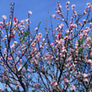 Beautiful Spring. Blooming Tree 1 Poster