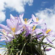 Beautiful Spring Flower Blossom In Sky Background Poster