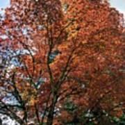 Beautiful Tree Poster