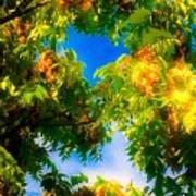 Beautiful Tree Tops In Sky Poster