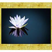 Beautiful Waterlilies Poster