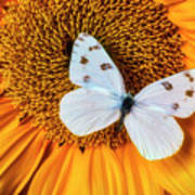 Beautiful White Butterfly On Sunflower Poster