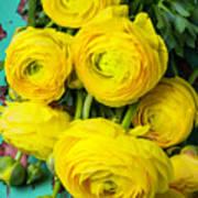 Beautiful Yellow Ranunculus Poster