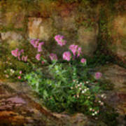 Beauty On An Old Stone Wall Poster
